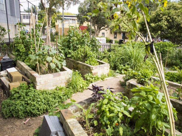 Community Garden City of Sydney